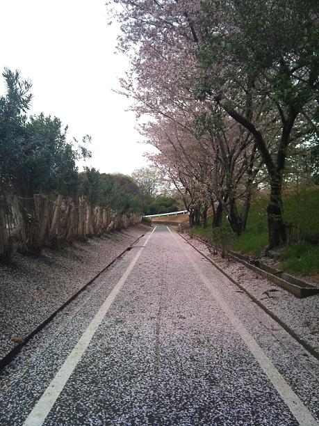 第二浄化センターランニングコース(桜)